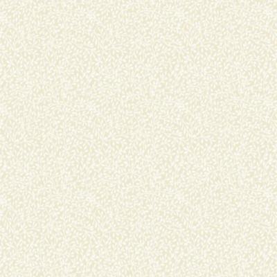 Ivory Q2
